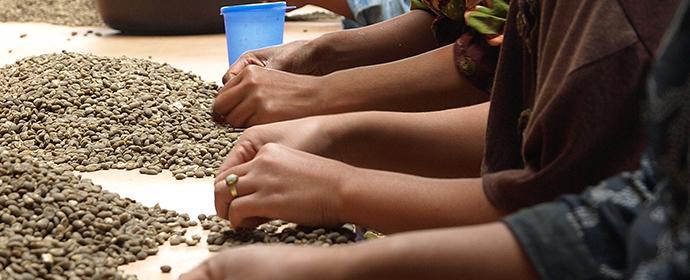コーヒー生豆へのこだわり